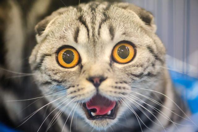 Ada dokter hewan takut kucing? Ada!