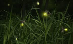 sinar kunang-kunang