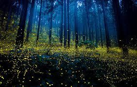 Kuning warna cahaya kunang-kunang
