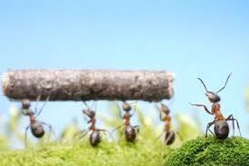 semut yang selalu bekerja sama