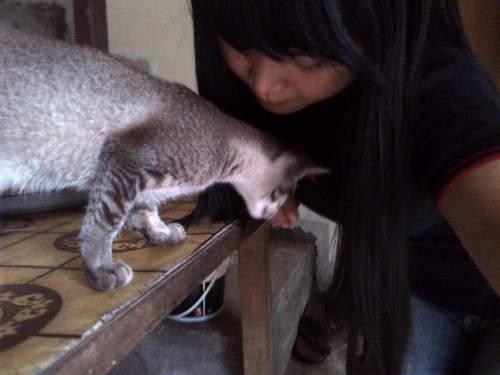 Pemilik Kucing Melatih Kucing Peliharaanya