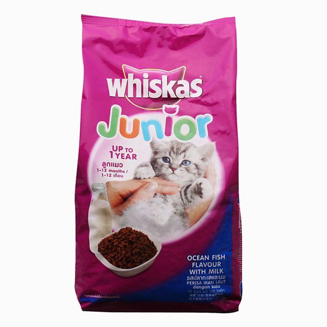 Makanan untuk anak kucing