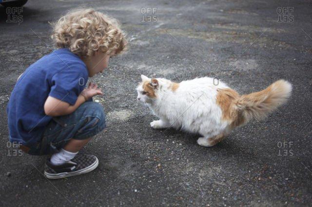 Menyapa kucing