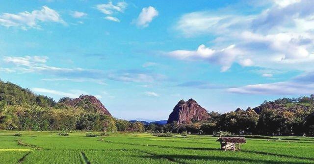 Hamparan sawah di sisi barat Gunung Sepikul