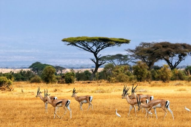 Gak perlu jauh-jauh ke Afrika