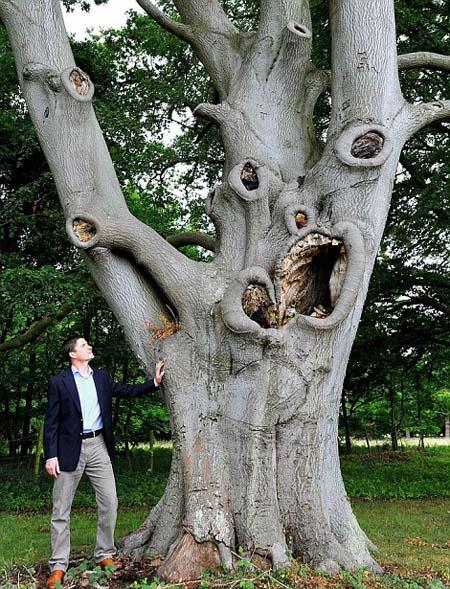 Pohon-seram 3