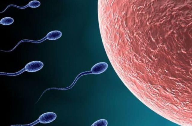 diéta hatása a sperma