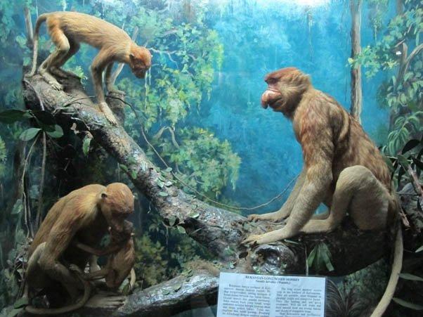 Museum dan Kebun Raya Bogor