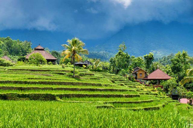 Pesona Ubud Bali