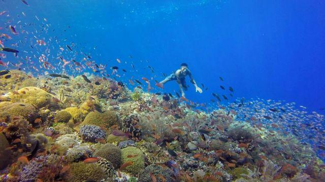 Keindahan bawah laut perairan Alor