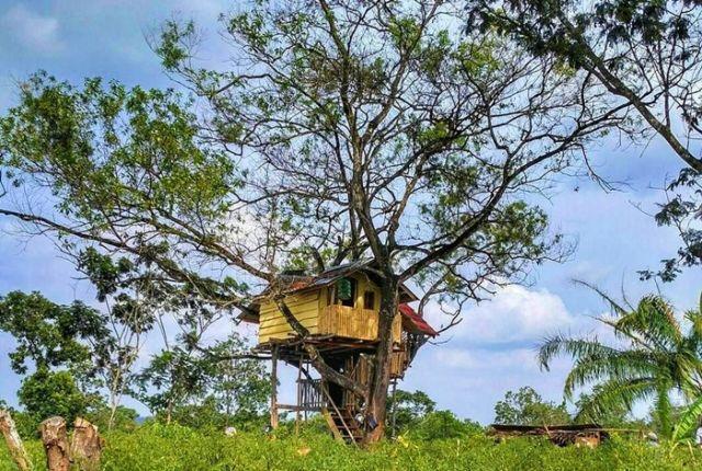 Rumah Pohon Hits