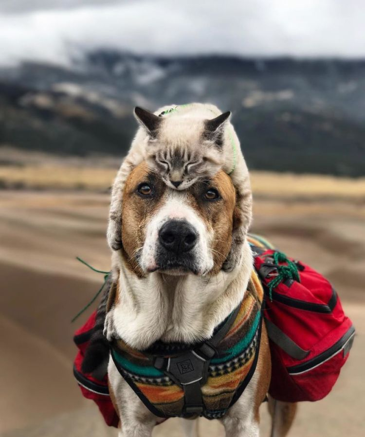 Gambar Kucing Dan Anjing godean.web.id