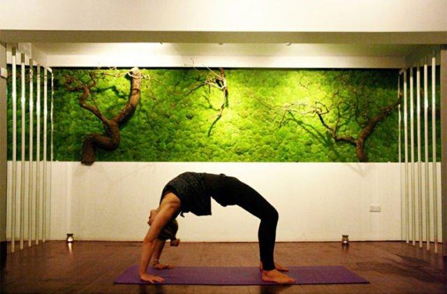 Dinding Lumut di Ruang Yoga