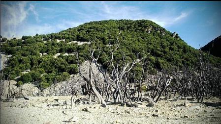 Landsape View dari Hutan Mati Gunung Papandayan By @rurydermawan
