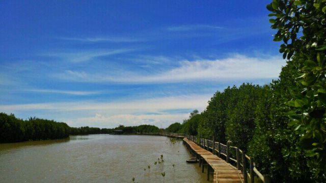 Wisata Mangrove Demang Gedi, Purworejo