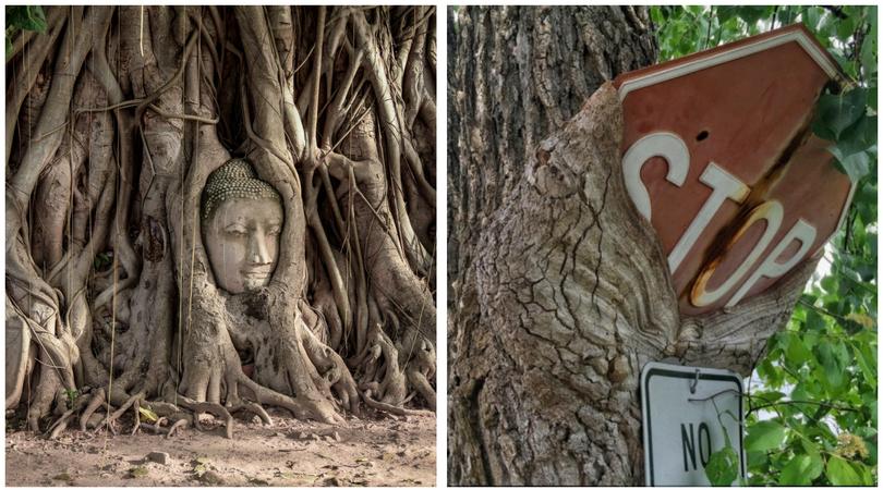 12 Foto Menakjubkan Yang Jadi Bukti Betapa Kuatnya Alam Sekitar Kita Luar Biasa