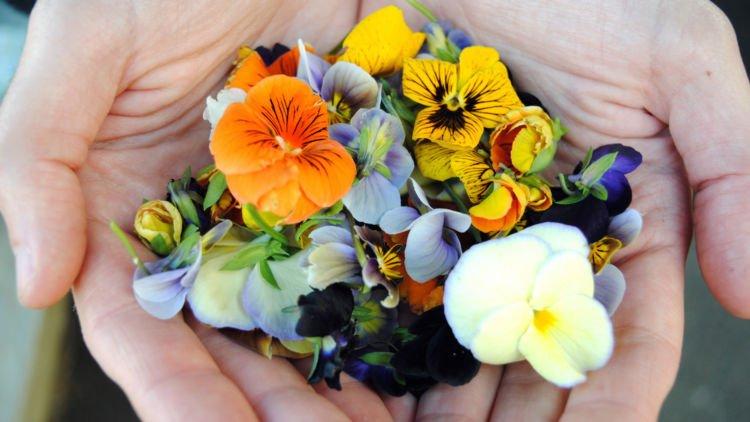 Ternyata Bunga Bunga Cantik Ini Bisa Dikonsumsi Layaknya Sayuran Lho Rasanya Kira Kira Gimana Ya