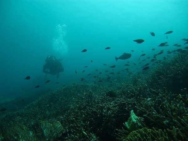 selain komodo, ada surga bawah laut juga di sini