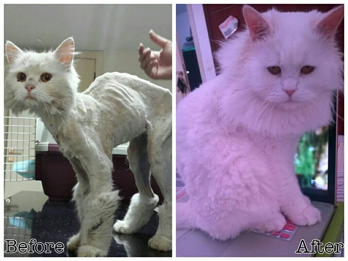 95 Foto Gambar Kucing Yg Belum Diwarnai Paling Keren