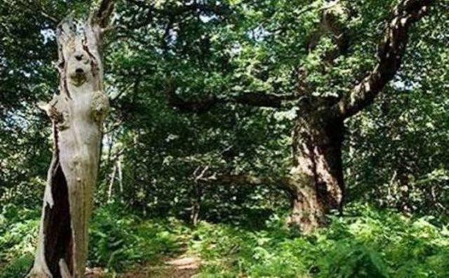 Hutan Sherwood