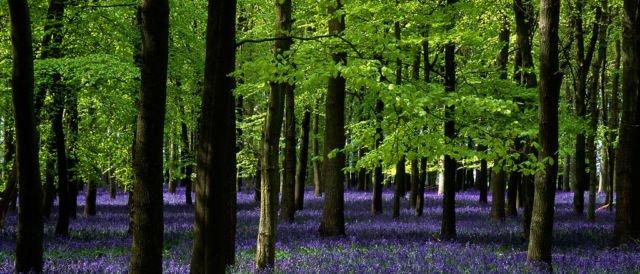 Hutan Terlarang
