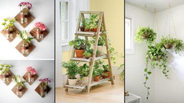 hoyag hayig: 15 cara seru menata tanaman hias di dalam