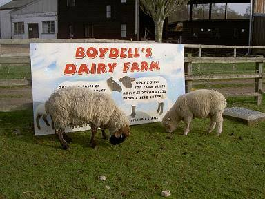 Peternakan – Boydells Dairy Farm