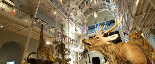 Natural Museum of Scotland