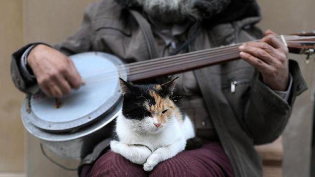 Istanbul Kota Ribuan Kucing Liar Jangan Kaget Kalau Di Pinggir Jalan Banyak Kandang Berjejer