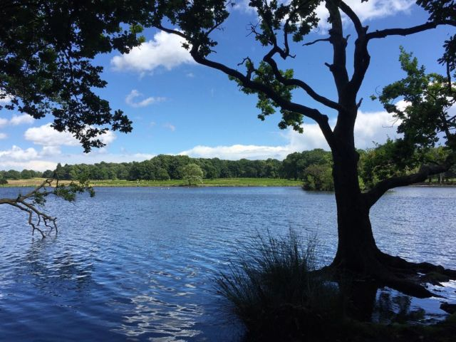 Richmond Park di London