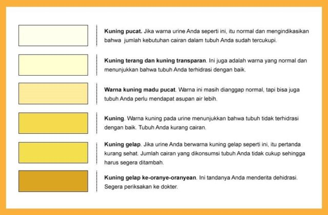 tabel warna urine