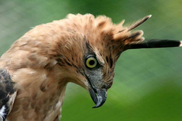 54 Gambar Binatang Yang Dilindungi Di Indonesia HD