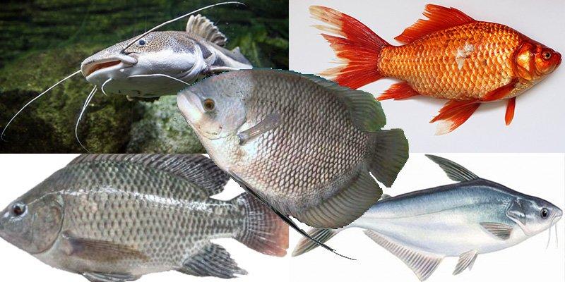 5 Jenis Ikan Favorit Masyarakat Indonesia