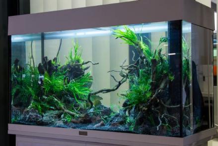 Berniat Menghiasi Rumah Dengan Aquarium Cek Daftar 5 Ikan