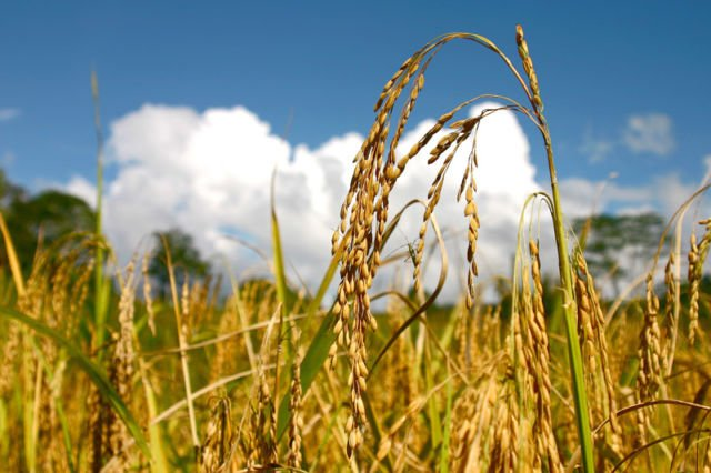 Seperti padi yang berisi, makin berisi makin merunduk.