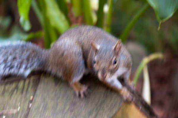 contoh foto blur karena gemetar