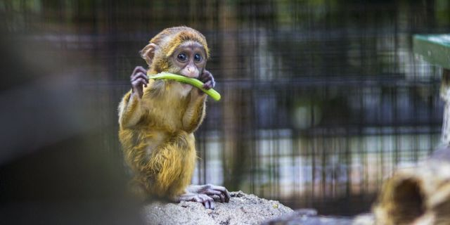 Pecinta kebun binatang.