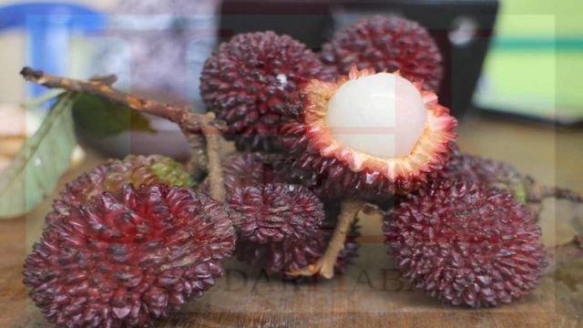 Sekilas mirip rambutan, tapi ternyata namanya buah Maritam
