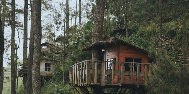 Rumah Pohon ala Omah Kayu