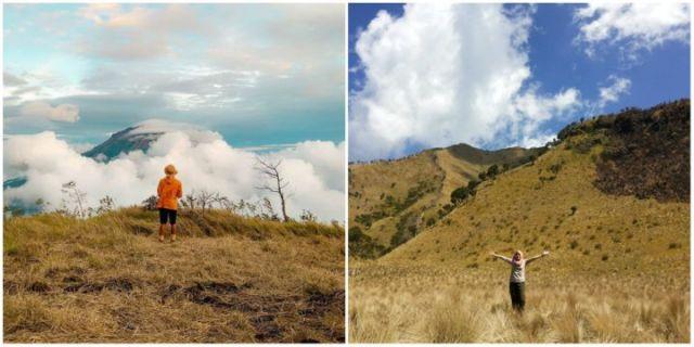 Padang rumput gunung sindoro
