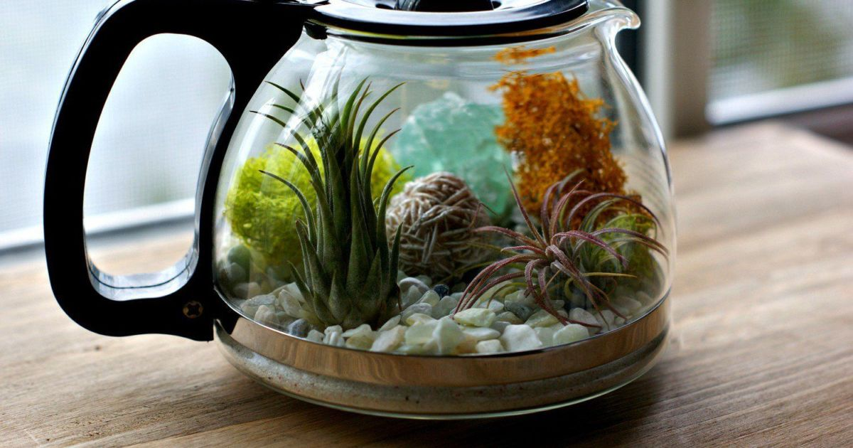 11 Ide Akuarium Mini Penyegar Ruangan Otakmu Jadi Ikut Bening Ide Mudah Bermunculan