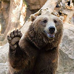 BearlyMax