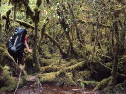 jalur menuju puncak Balease