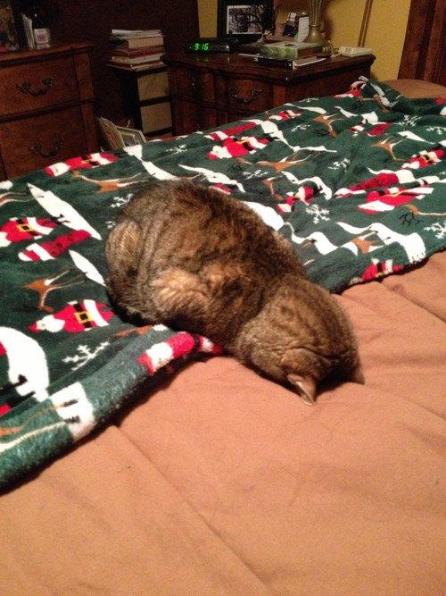 Jangan Salah Ternyata Kucing Kalau Baru Bangun Tidur Lucu