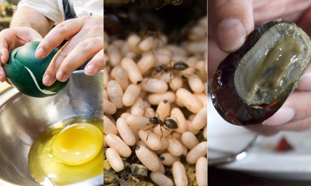 Selain Telur Ayam, 8 Telur Hewan Ini Juga Bisa Dimakan. Mungkin Nggak Pernah Kepikiran Aja