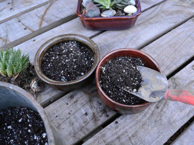 9 Trik Merawat Kaktus Dan Sukulen Hias Biar Nggak Cepat