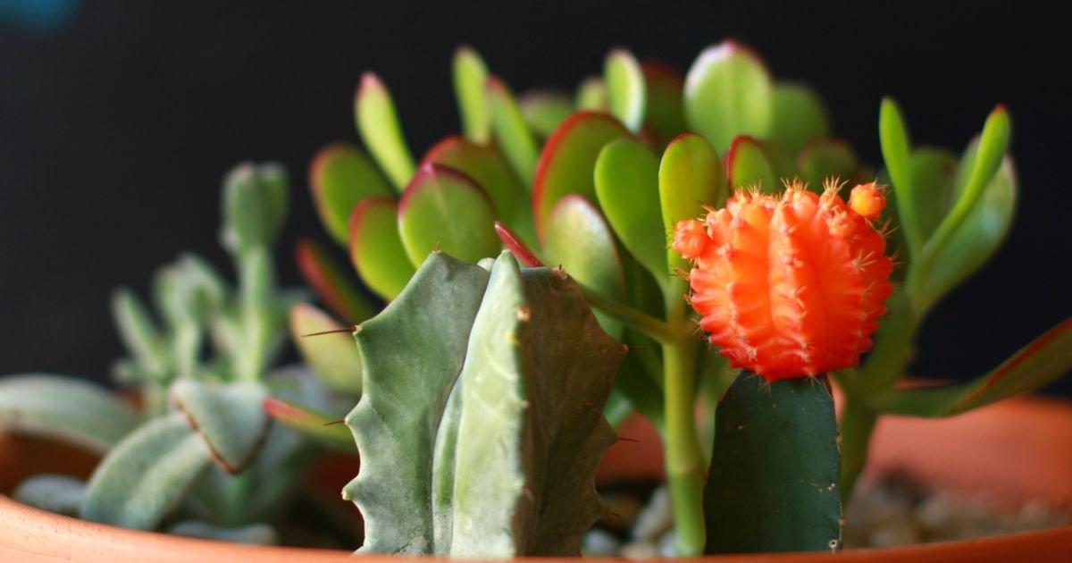 9 Trik Merawat Kaktus Dan Sukulen Hias Biar Nggak Cepat Busuk
