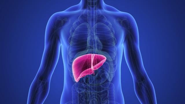 Menyehatkan Liver