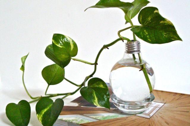 Hanya Butuh Segelas Air Untuk Merawat 11 Tanaman Dan Bunga Yang Bisa Dijadikan Hiasan Ini