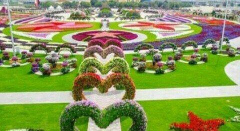 Kebun Begonia Glory Bandung